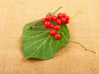 Red berries on leaf and sacking background