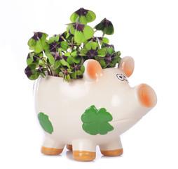 Glücksschwein mit Glücksklee