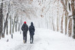 Leinwanddruck Bild - Couple walking during heavy snowstorm on the alley under tree
