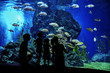 Silhouettes of family with kids in oceanarium