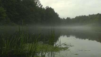 fog on the river