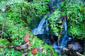 little mountain stream and greens