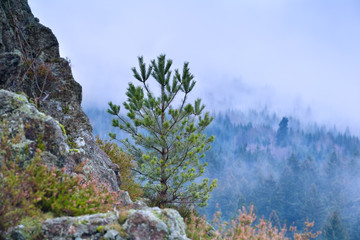 pine tree on rock and foggy mountains