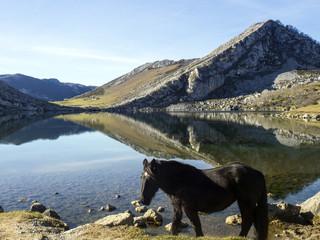 Caballo en el Lago Enol en los Picos de Europa