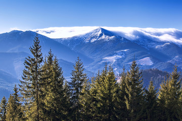 Forest, mountains, sky and fog of Carpathians