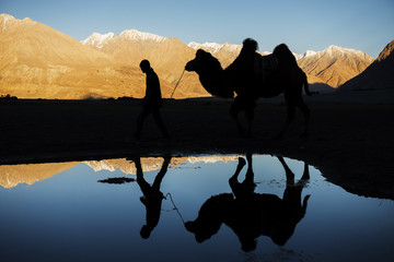silhouette camel reflection and snow mountain range