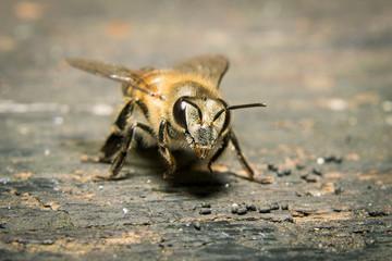 Macro shot of bees swarming on wood.