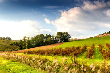 Autumnal Vineyards on badlands