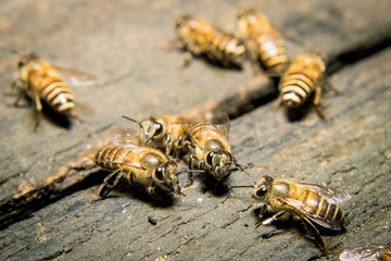 Macro shot of bees swarming on wood.