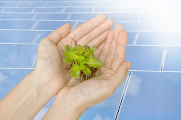 Hands holding green plant on solar cells,  Ecology concept