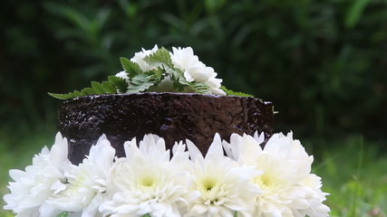 chocolate cake decorated with white fresh flower stand on green