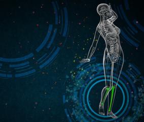 3d render medical illustration of the tibia