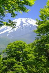 富士と新緑のブナ