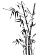 Bamboo branches isolated on the white background. Vector - 75829955