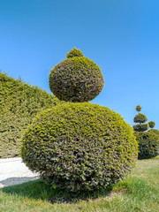 Green shrub
