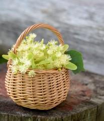 medical linden flowers harvest wicker basket on summer grass