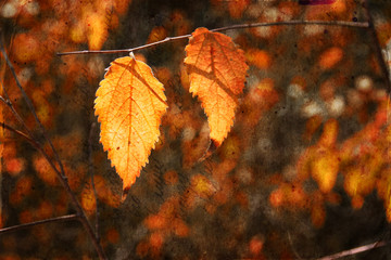 Colorful bautiful autumn leaves on tree branch with texture over