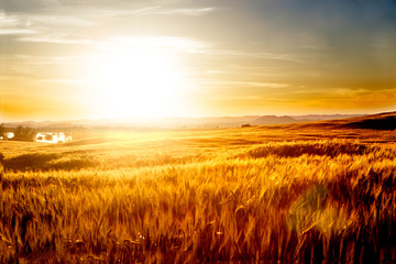 Wheat fields landscape. Agriculture