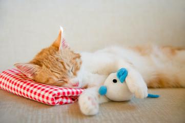 Schlafende junge Katze