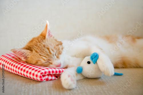 canvas print picture Schlafende junge Katze
