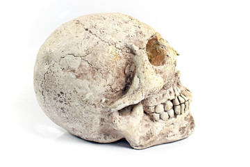 Human skull made of plaster isolated on white