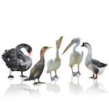 Waterbirds poster