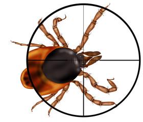 kill insects, machine gun, sight, target,