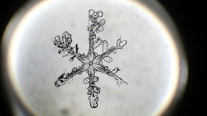 Snowflake that melts