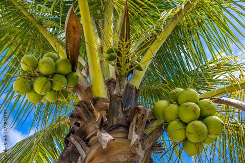 Aluminium Palm boom Coconuts on the tree