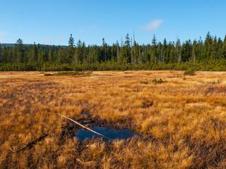 Peat bog of Jizera Mountains