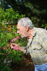 senior gardener and  bleeding heart  flowers