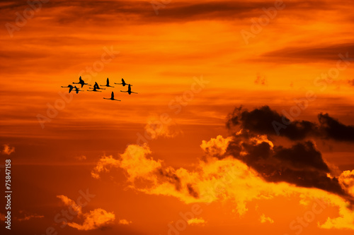 Foto op Aluminium Flamingo flamingos flying at sunset