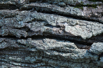 The bark of the tree moss