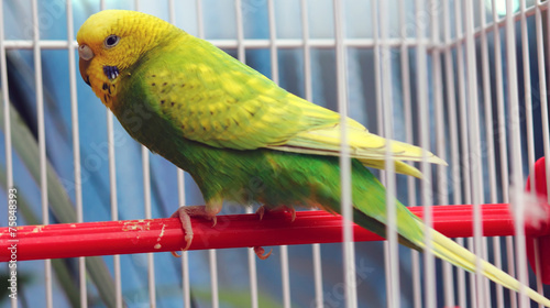 Papiers peints Perroquets green parrot in a cage