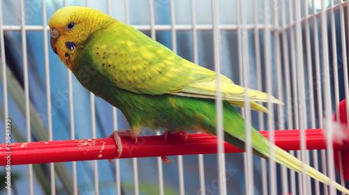 Foto op Plexiglas Papegaai green parrot in a cage