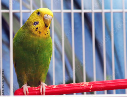 Tuinposter Papegaai parrot sits in a cage