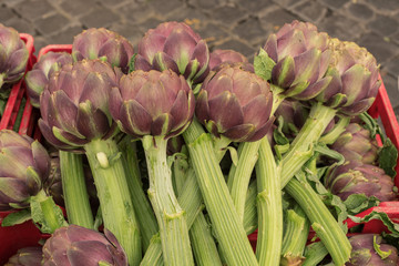 fresh purple artichokes
