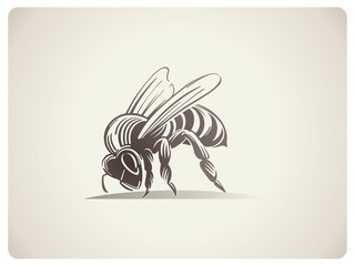 Schematic illustration Bee
