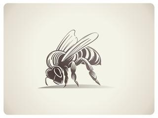Schematic illustration Bee