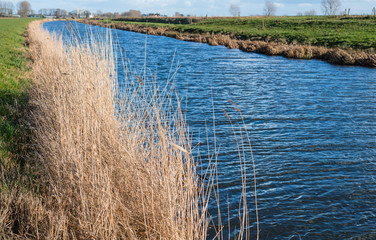 Yellowed reeds and a blue reflecting stream