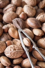 A Mixture of Walnuts, Hazelnuts, Brazil Nuts, Almonds and Pecans