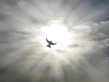 Fototapety easter holy spirit peace dove flying open sky clouds sun rays