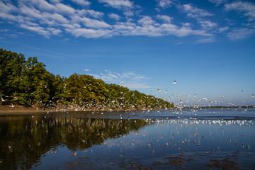 Birds bevy flying up Rozmberk pond,Czech Republic