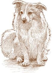 fluffy lap dog