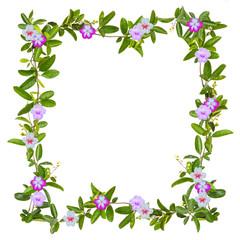 frame of creeper flower isolated