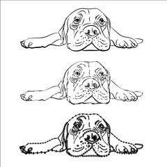 Drawing of  lying bullmastiff