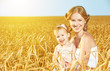 happy family in summer nature in the wheat field