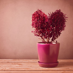 Heart shape plant on wooden table. Valentine's day concept