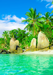 Shore Season Paradise