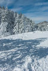 樹氷と空と影